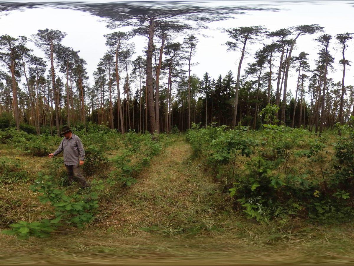 Unser Beitrag mit 360°Video im EU Projekt Komsilva